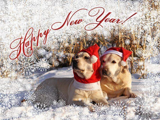 Картинка к Новому году с собаками Новогодние картинки