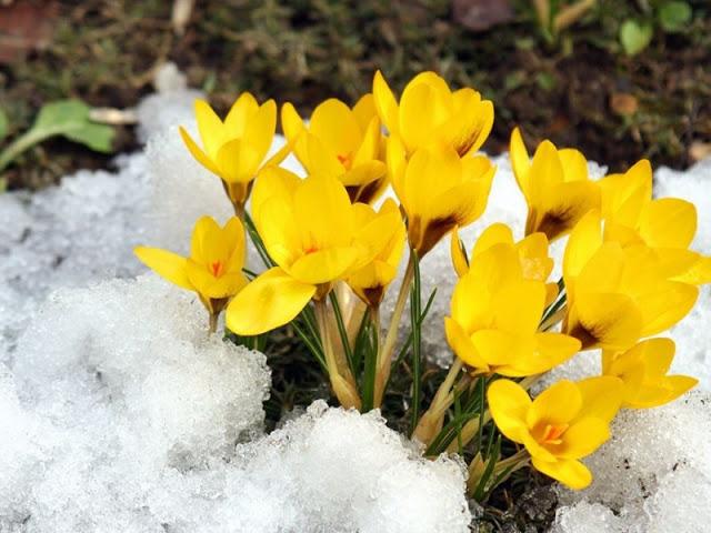 Первые весенние цветы Весенняя природа