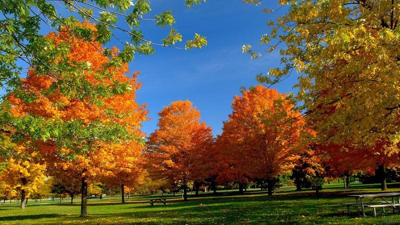 Осень в картинках Времена года осень